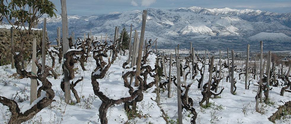 vini-wine-etna-guardiola-vineyard-02